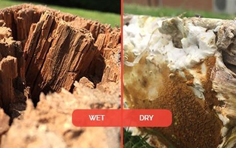 What does dry rot smell like