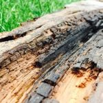 Dry Rot In Lockerbie